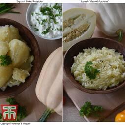 Squash 'Potatoes Duo' (Winter) - seeds