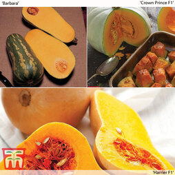 Butternut Squash Collection