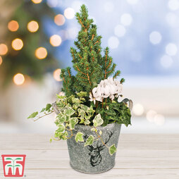 Winter Stag Planter - Gift