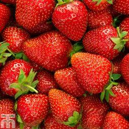 Strawberry 'Elsanta'