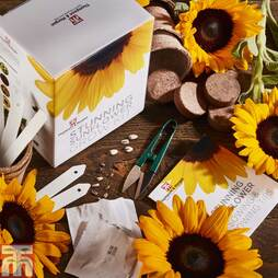 Stunning Sunflower Growing Kit