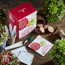 Stunning Succulents Growing Kit