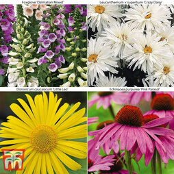 Summer Perennial Collection