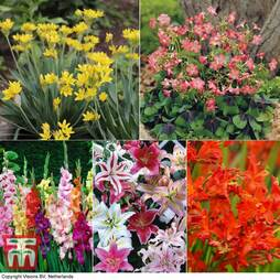 Summer Flowering Bulbs Collection