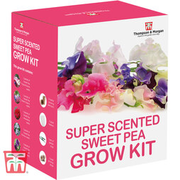 Super Scented Sweet Pea Growing Kit