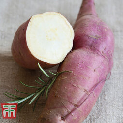 Sweet Potato 'Erato White'