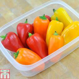 Sweet Pepper 'Lunchbox Mix' F1 Hybrid