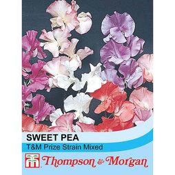 Sweet Pea 'Fragrant' (Start-A-Garden™ Range)