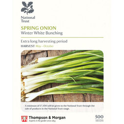 Spring Onion 'Winter White Bunching' (National Trust)