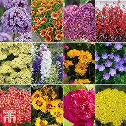 Perennial Summer Colour Collection