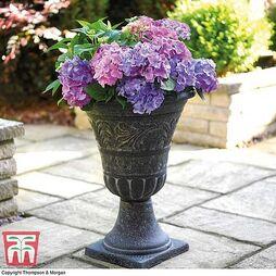Tall Urn Planter - Gift