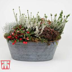 Outdoor Tin Planter - Gift