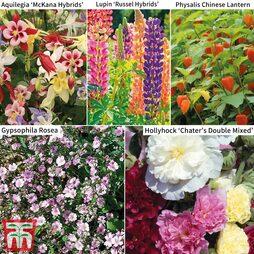 Perennial Saver Collection