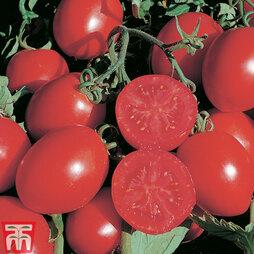 Tomato 'Falcorosso' F1 Hybrid
