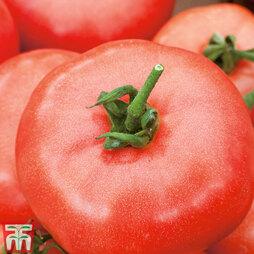 Tomato 'Beefmaster'