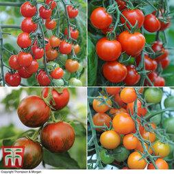 Tomato Lucky Dip