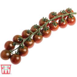 Tomato 'Solena Chocolate' F1 Hybrid