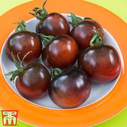 Tomato 'Indigo Rose'