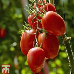 Tomato 'Nagina' F1 Hybrid