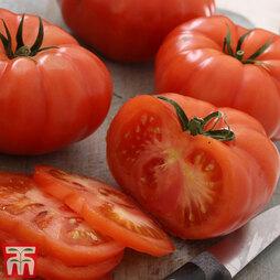 Tomato 'Supersteak' F1 Hybrid