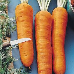Carrot 'Autumn King' (Start-A-Garden™ Range)