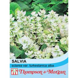 Salvia sclarea var. turkestanica alba