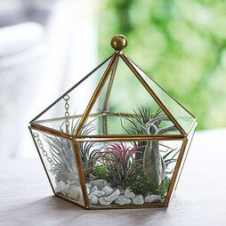 Airplant Terrarium Kit (House Plant)