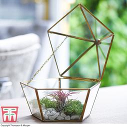 Terrarium - Gift