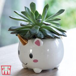 Succulent & Unicorn Planter