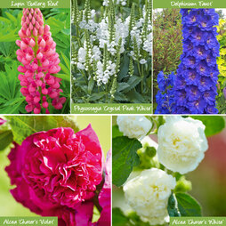 Sensational Summer Perennial Collection