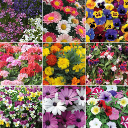 Garden Bedding Mix