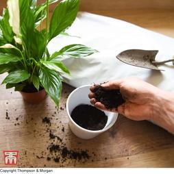 Incredicompost Peat Free Houseplant