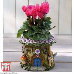 Woodland Fairy Planter with Cyclamen - Gift