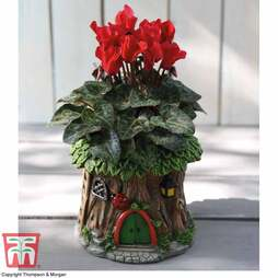 Woodland Ladybird Planter with Cyclamen - Gift