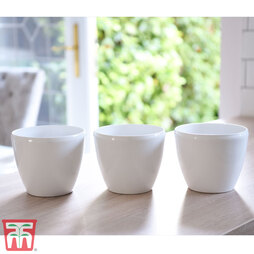 White Plastic Pot