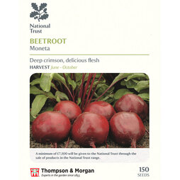 Beetroot 'Moneta' (National Trust)