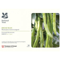 Broad Bean 'Masterpiece Green Longpod' (National Trust)
