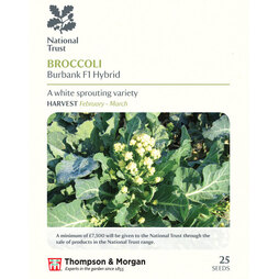 Broccoli 'Burbank' F1 Hybrid (White Sprouting) (National Trust)