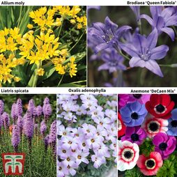 100 Days of Flowering Bulb Collection