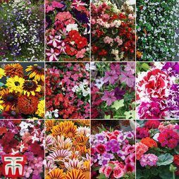 Bumper Garden Collection