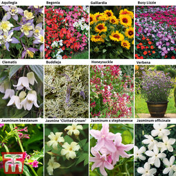 Gardening Plant Collection