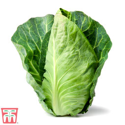 Cabbage Pointed Continuity Duo