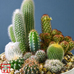 Cactus Mix (House Plant Seeds)