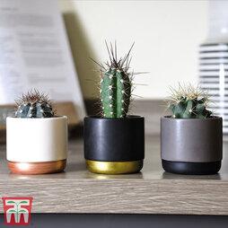 Nurserymans Choice House Plant Mix (House Plant)