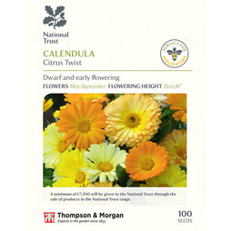 Calendula 'Citrus Twist' (National Trust)