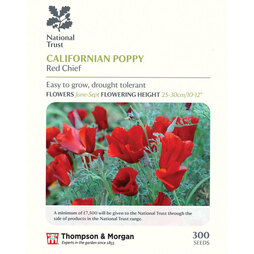 Californian Poppy 'Red Chief' (National Trust)