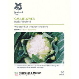 Cauliflower 'Boris' F1 Hybrid (National Trust)