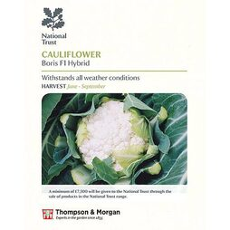 Cauliflower 'Boris' F1 Hybrid (National Trust)