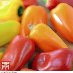 Chilli Pepper 'Fresno Mix' F1