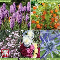 Stunning Summer Perennials